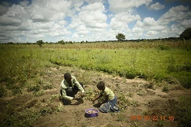 ザンビア共和国の農業