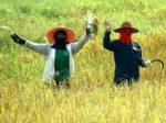 タイの季節は雨季・乾季・暑季!季節ごとの行事のまとめ