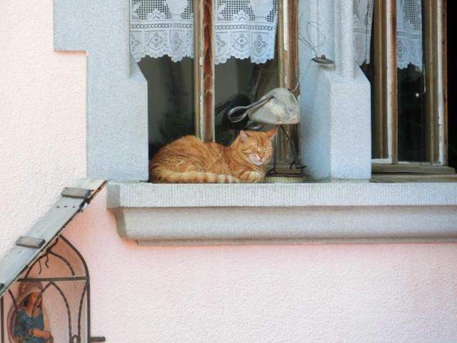 グリュイエールの町の猫