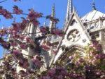 フランス留学の魅力とは?留学経験者が語るフランスの良さ