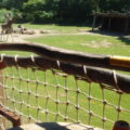 ドイツのライプツィヒ動物園は動物が檻にいない!広大な動物園の魅力とは