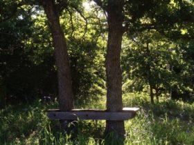 オクラホマの森