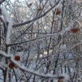 カナダ中部「サスカチュワン州」の気候とは?真冬と真夏の気温差は80度
