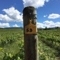 カナダで農業に転職!ワイン用のブドウ畑が私の仕事場になりました
