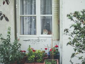 家の窓と猫