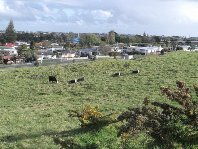 ニュージーランドの動物