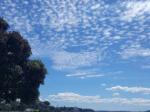 ニュージーランドでの就労ビザ方法とは?私のビザ取得体験記