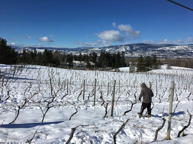 雪の積もった農園